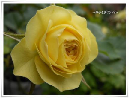 DSCN2538_convert_20120602161857.jpg