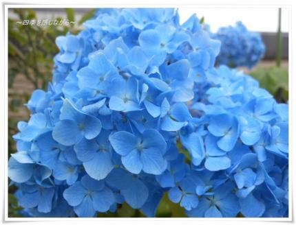 DSCN2539_convert_20120602161921.jpg