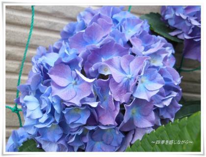 DSCN2541_convert_20120602162010.jpg