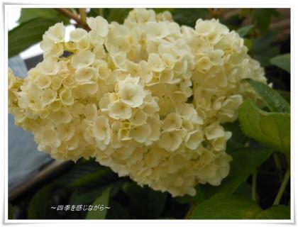DSCN2542_convert_20120602162036.jpg