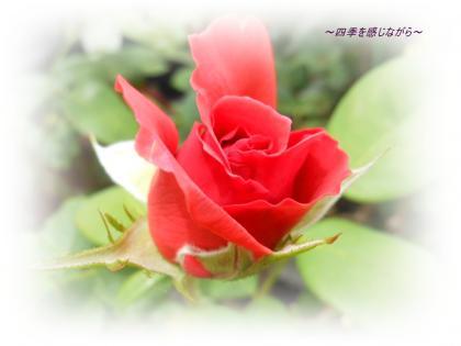 DSCN2551_convert_20120605110054.jpg