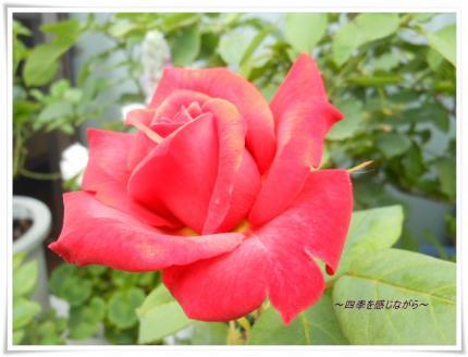 DSCN2579_convert_20120608122851.jpg
