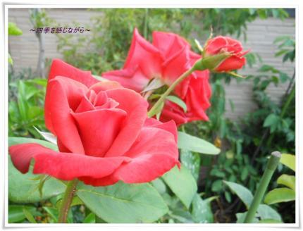 DSCN2582_convert_20120608122919.jpg