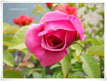 DSCN2603_convert_20120608123239.jpg