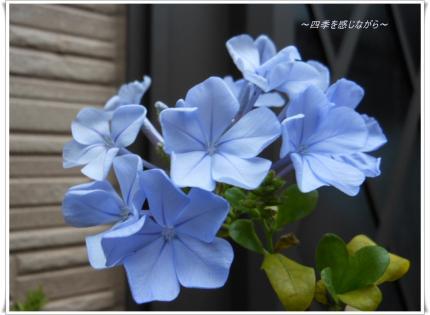 DSCN2613_convert_20120608123327.jpg