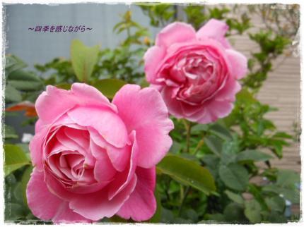 DSCN2638_convert_20120613120136.jpg