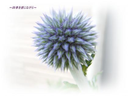 DSCN2642_convert_20120613120213.jpg