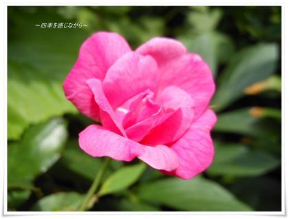 DSCN2735_convert_20120623123412.jpg