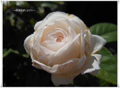 DSCN2786_convert_20120629152019.jpg