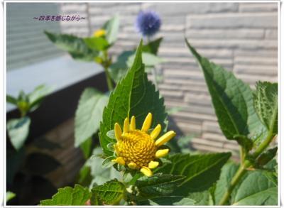DSCN2788_convert_20120629152044.jpg