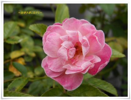 DSCN2797_convert_20120702095354.jpg