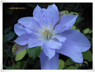 DSCN2885_convert_20120707223901.jpg