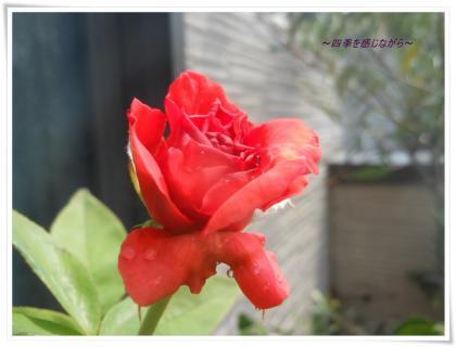 DSCN9713_convert_20120726105021.jpg