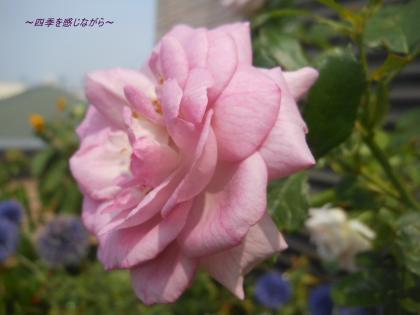 DSCN9714_convert_20120726105047.jpg