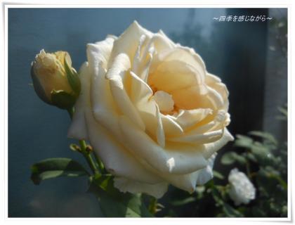 DSCN9719_convert_20120726105221.jpg