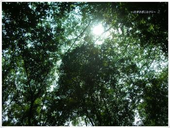 DSCN9783_convert_20120801000840.jpg
