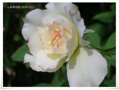 DSCN9919_convert_20120905234855.jpg