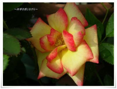 DSCN9920_convert_20120905234955.jpg