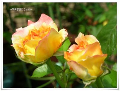 DSCN9922_convert_20120905235048.jpg