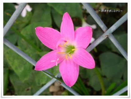 DSCN9982_convert_20120916105913.jpg
