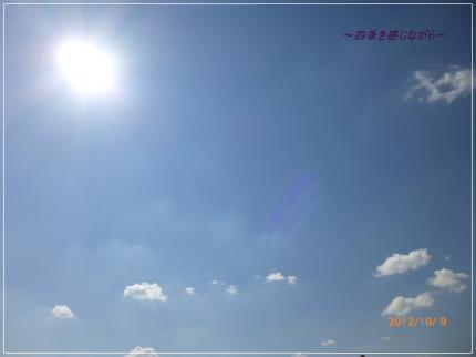 P1040059_convert_20121009222607.jpg