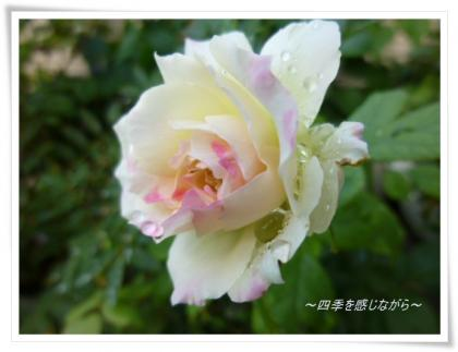 P1040086_convert_20121011100939.jpg
