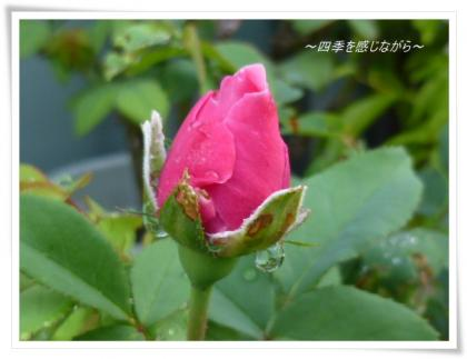 P1040089_convert_20121011101123.jpg
