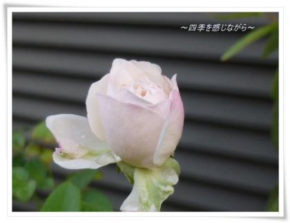 P1040090_convert_20121011101149.jpg