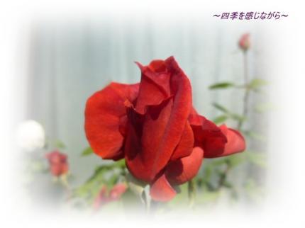 P1040191_convert_20121027161624.jpg