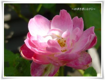 P1040194_convert_20121027161656.jpg