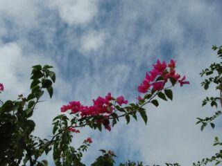 20120607可憐な花と青空