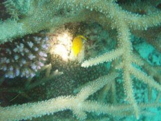 20120610ミナミハコフグ幼魚