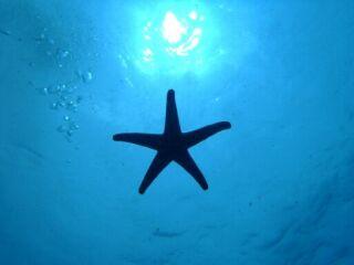 20120614コーラルに星型UF0