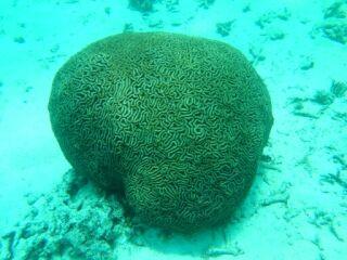 20120615ノウサンゴ