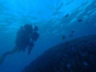 20120614中性浮力を保ち撮影