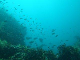 20120801根に群れる魚