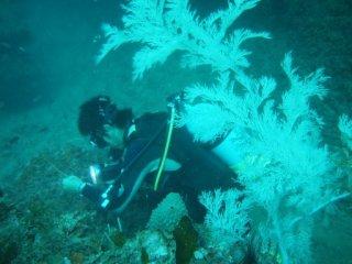 20120802ガラスハゼを探す清水さん