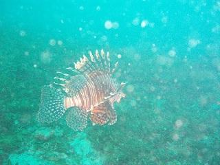 20070423南部ミノカサゴ
