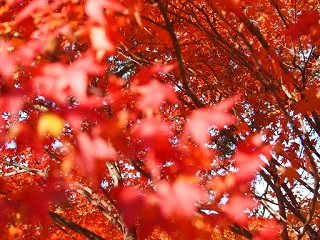 20131203三木山森林紅葉アップ