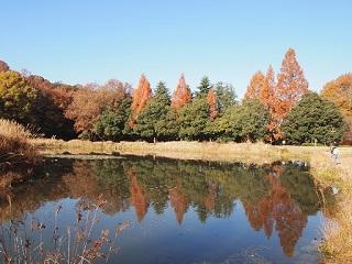 20131203三木山森林紅葉池2