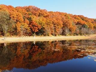 20131203三木山森林紅葉池3