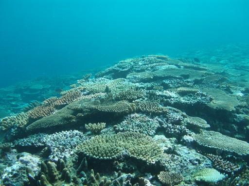 20091109珊瑚礁