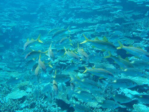 201009スーパーサンゴにフエダイ