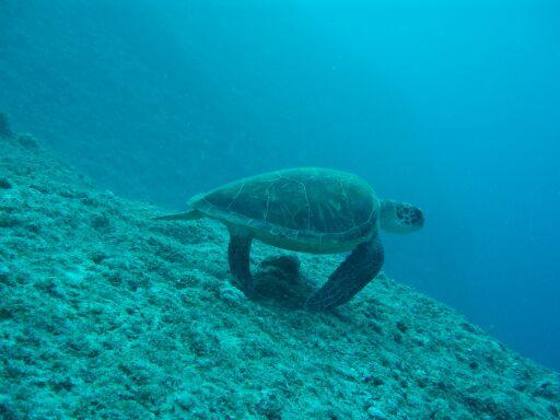 200911海亀逃げる中ノ島ホール