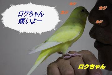 IMG240606-4.jpg