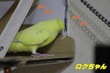 IMG240606-6.jpg