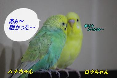 IMG241117-1.jpg