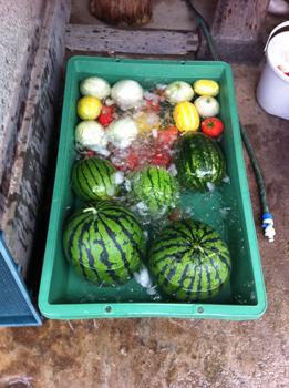 2012芋なおらい野菜