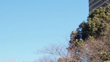 VLC02294b.jpg