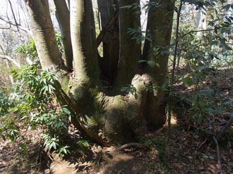 「北本自然観察公園の樹の根元」